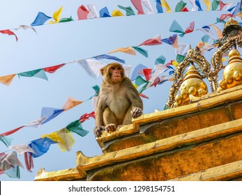 Macaque monkey sitting on the stupa in Buddhist temple Swayambhunath known as Monkey temple on a background of prayer flags and sky, Kathmandu, Nepal