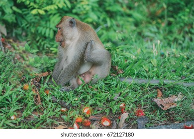 Macaque monkey. Wildlife wallpaper. Film color effect.