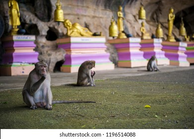 Macaque rhesus with sculptures