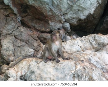 Macaques on the Rocks