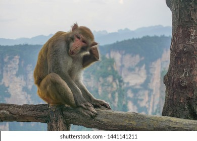 """Macaques in Zhangjiajie National Park, Wulingyuan Scenic Area, Hunan, China. Some of these mountains inspired the floating Hallelujah Mountain in the movie """"Avatar"""""""