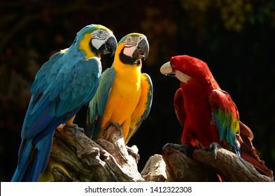 Parrot Price Images, Stock Photos & Vectors | Shutterstock