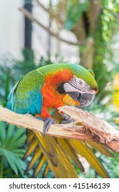 macau parrot in the zoo
