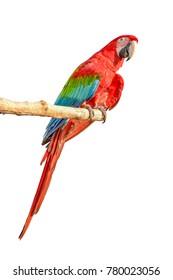 Macaw bird in the Amazon forest Branches with white background