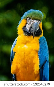 macaw bird head