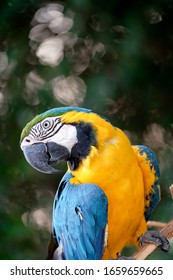 Macaw bird is looking at me.