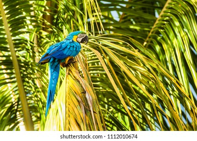 Macaw in Colombia