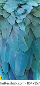 Macaw Fir
