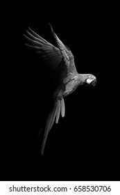 macaw flying out of the dark and into the light, amazone wildlife wallpaper