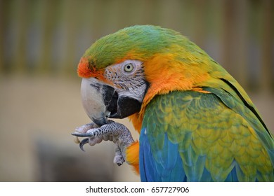 Macaw having a snack