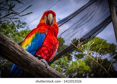 The red-and-green macaw, also known as the green-winged macaw, is a large, mostly-red macaw of the genus Ara. This is the largest of the genus Ara.
