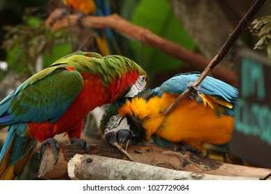 macaw, nature, color