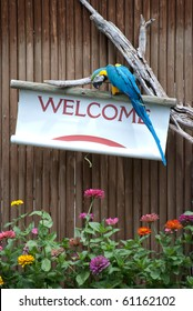 A Macaw opens a welcome banner.