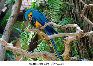 Macaw Parrot at Bali Bird Park, Indonesia