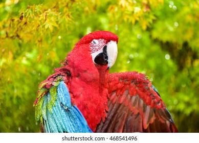 Parrot Bath Images, Stock Photos & Vectors   Shutterstock