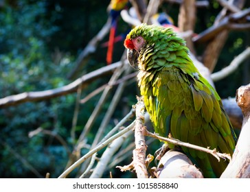 Macaw parrot bird perched on a branch