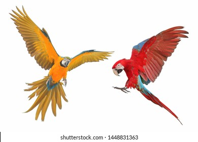 Macaw parrot flying isolated on white background.