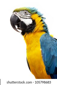 Macaw parrot isolated on white background
