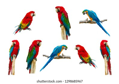 Parrot Smiling Stock Photos, Images & Photography | Shutterstock