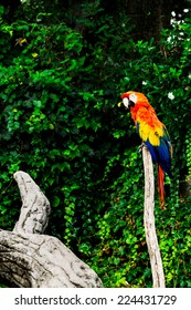 Macaw parrot in nature