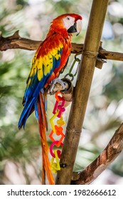 Macaw parrot on a bamboo branch at the Phoenix Zoo