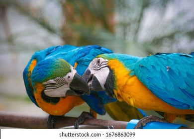 Macaw parrot on the branch in the forest.