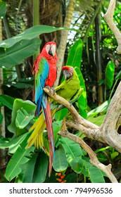 Macaw Parrots at Bali Bird Park, Indonesia