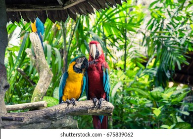 Macaw, Psittacidae ,Bird Macaw perched on the branch.