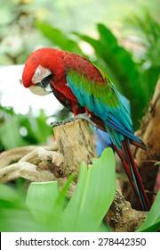 macaw sleeping on branch