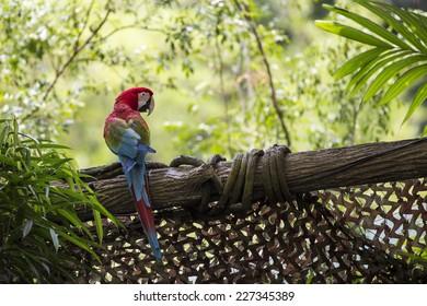Macaw standing on log