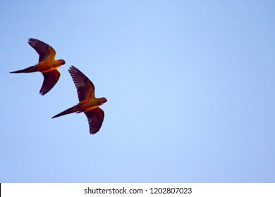 Macaw and Sun Flock of flying in the  ิblue sky