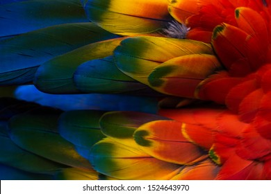 Macaw wings. Thé stunning beauty of nature