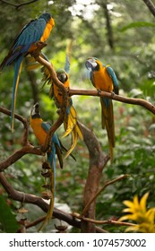 Macaws in Captivity