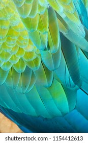Macaw's Colourful Feathers in Details