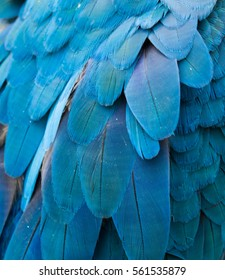 macaw's feather
