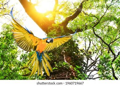 ึ Macaws fly in the forest, view trees and sunlight.(photo blurred)