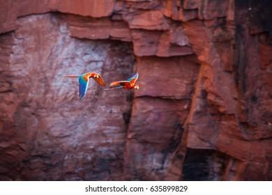 Macaws flying in Buraco das Araras, Brazil