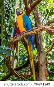 Macaws in Iguazu Falls Bird Park, Brazil.