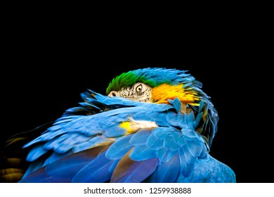 macaws sitting on a branch