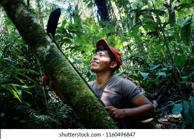 Macedonia, Amazonia / Colombia - MAR 15 2016: local ticuna tribal member measuring a log to fall in the middle of the rainforest