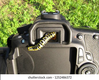 Machaon caterpillar and Camera The caterpillar is one of the stages of the growth of some insects. They harm plants.