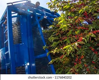 Machine harvesting coffe on field in Minas Gerais State