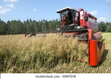 Machine harvesting Rapeseed