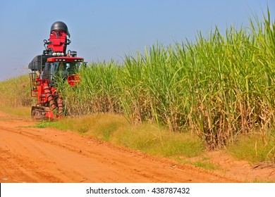Machine harvesting sugar cane on farms of Brazil