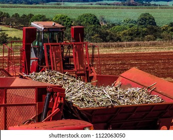 machine makes sugar cane planting on a farm in the state of Sao Paulo