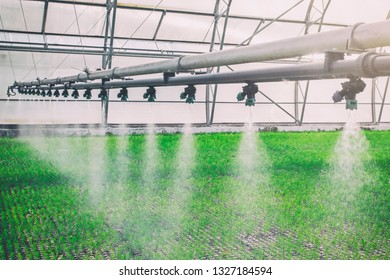 machine for spraying water in the greenhouse, spraying water for plants in greenhouses, growing organic matter in greenhouse conditions