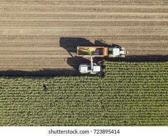 Maschinen, die Mais auf dem Feld ernten. Lufttrockenaufnahme.