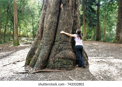 machismo, allegory of the power of the male, falocracy, visual allegories, visual metaphors, photographic allegories, ,hugging the grandfather, the largest giant eucalyptus in Europe, Lugo, spain,
