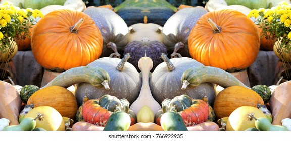 machismo, Metaphor of the penis with two large testicles, symmetrical composition of pumpkins,