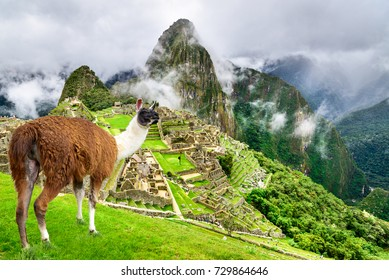 Machu Picchu, Peru - Ruins of Inca Empire city and Llama animal, in Cusco region, amazing place of South America.